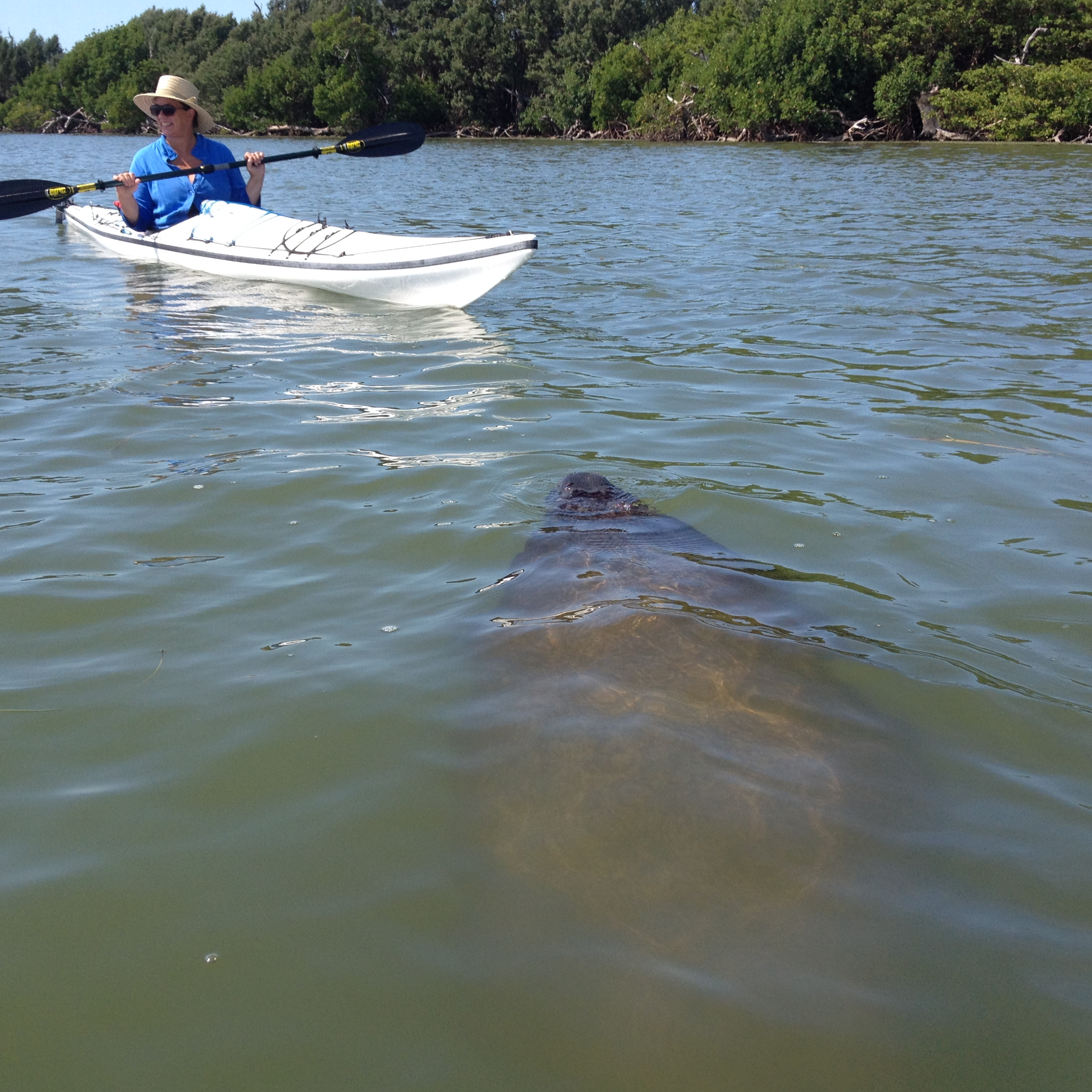 Manatee and Dolphin and Osprey, Oh My!