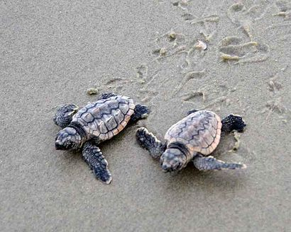 Hot Chicks, Cool Dudes: it's Turtle Season!